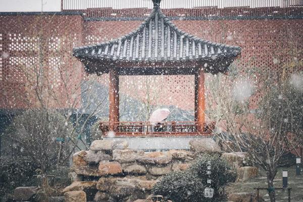 复旦大学 雪至的冷意,伞下的温柔(黄玫瑰/摄)