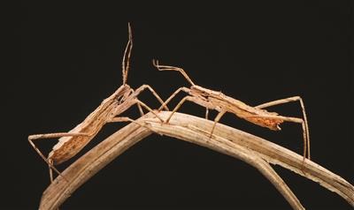 15岁初中生迷上为昆虫拍写真