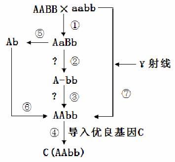 电路 电路图 电子 原理图 355_329